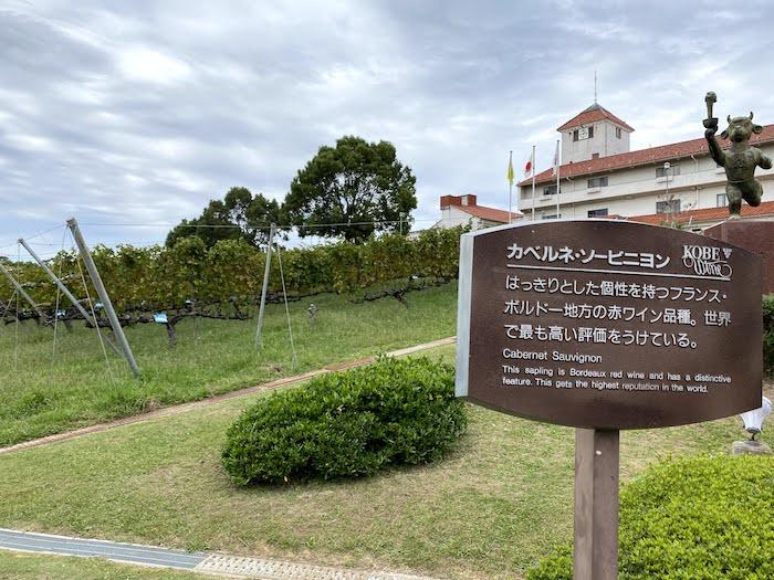 神戸ワイナリーカベルネソーヴィニョン畑